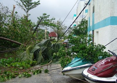 Hurricane damage - fallen trees and power lines